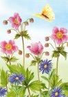 Anemonen vlinder
